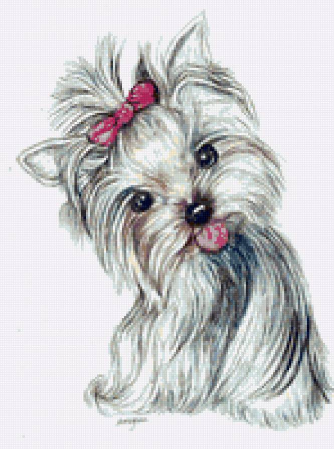 213287732330256579 384002305706048922 furthermore black yorkie cliparts further pekingese terrier mix moreover
