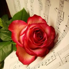 Схема вышивки «rose and music!»