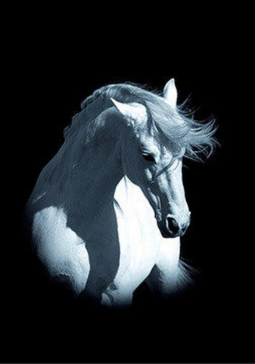 Black and white horse rearing