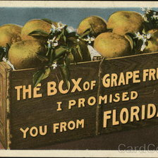 Схема вышивки «Box of Grapefruit from Florida»