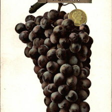 Схема вышивки «Half Dollar and Bunch of Tokay Grapes»