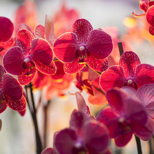 Схема вышивки «Fire_butterfly(red flower)»