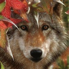 Схема вышивки «AUTUMN ENCOUNTER - GRAY WOLF»