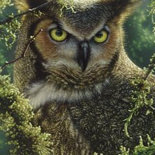Схема вышивки «WATCHING AND WAITING - GREAT HORNED OWL»