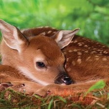 Схема вышивки «TWO DAY OLD WHITE-TAILED DEER BABY»